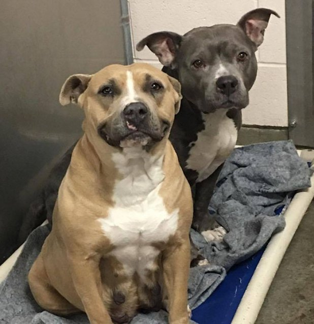 shelter-dog-smile-adoption-riley-2