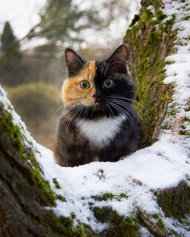 Two-faced-cat-yana-1