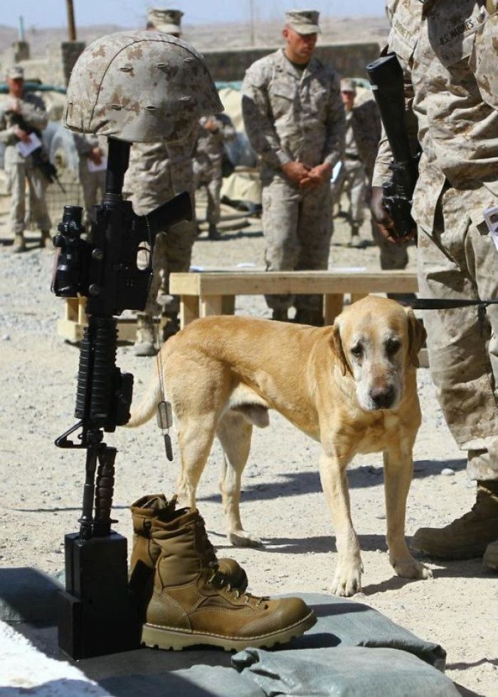 A Dog Saying Goodbye To His Soldier Friend