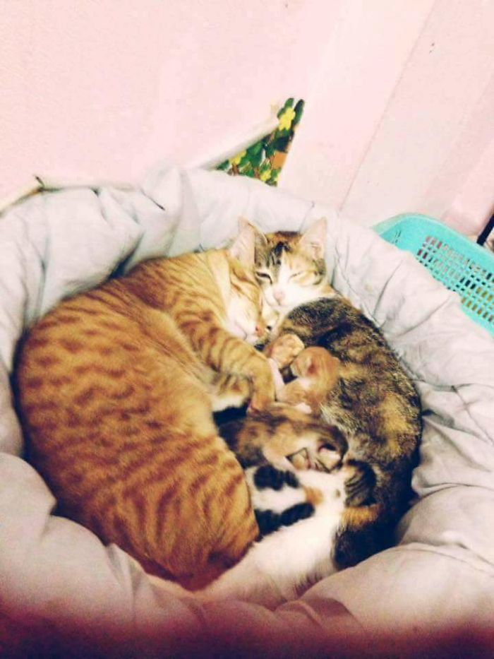 Download Father Cat Supports Mom Cat Giving Birth, Wins Everyone's ...