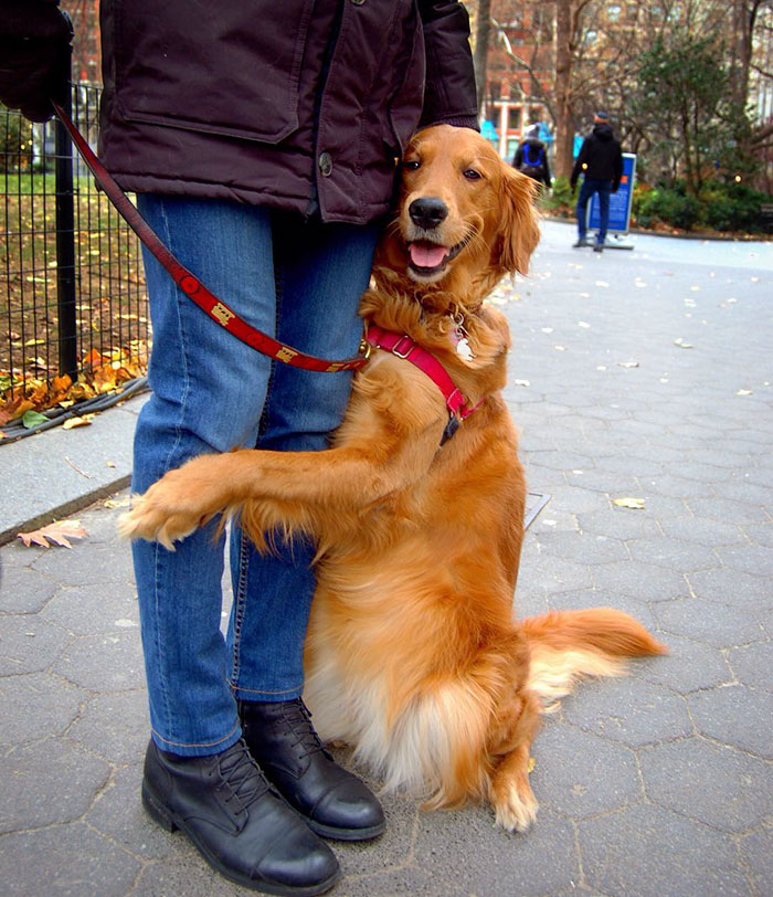 dog-gives-hugs-louboutina-retriever-new-york-18