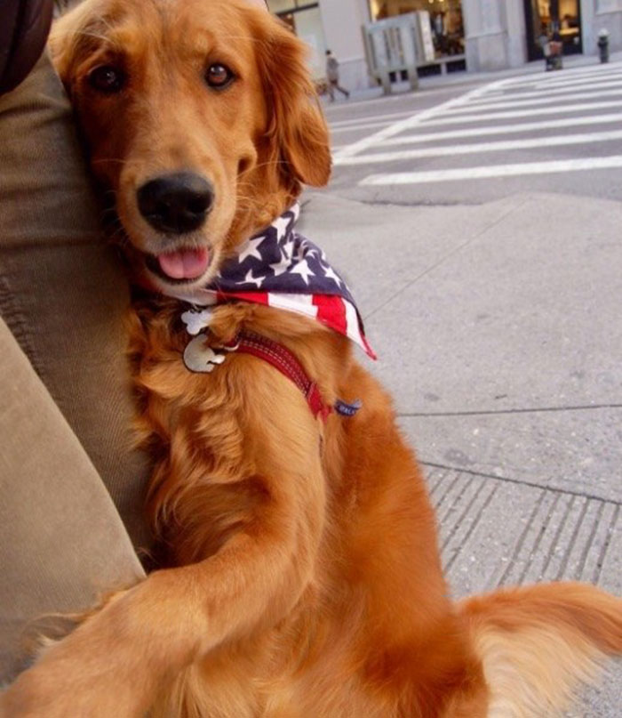 dog-gives-hugs-louboutina-retriever-new-york-2