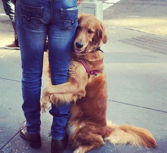 dog-gives-hugs-louboutina-retriever-new-york-6