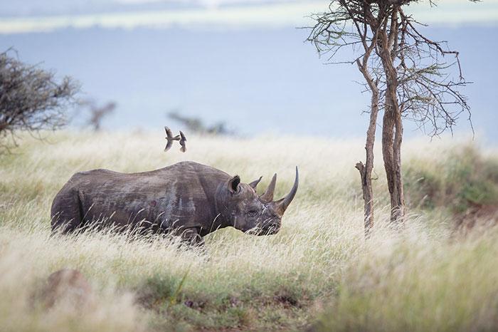 national-park-shoots-people-protects-rhinos-kaziranga-11