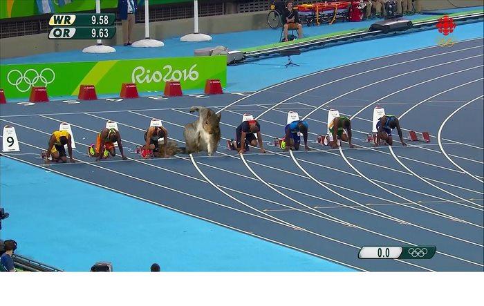 Run Squirrel, Run!