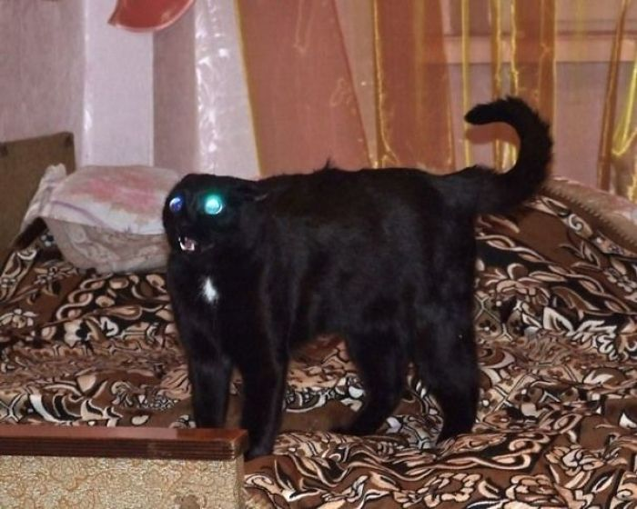 58d0df5f2bb7f wyCqP  605 - 30+ Photos That Prove Cats Are Actually Demons