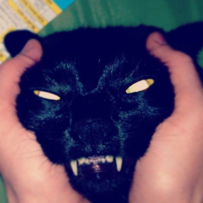 58d0e29eeb00d 48OqnSs  605 - 30+ Photos That Prove Cats Are Actually Demons