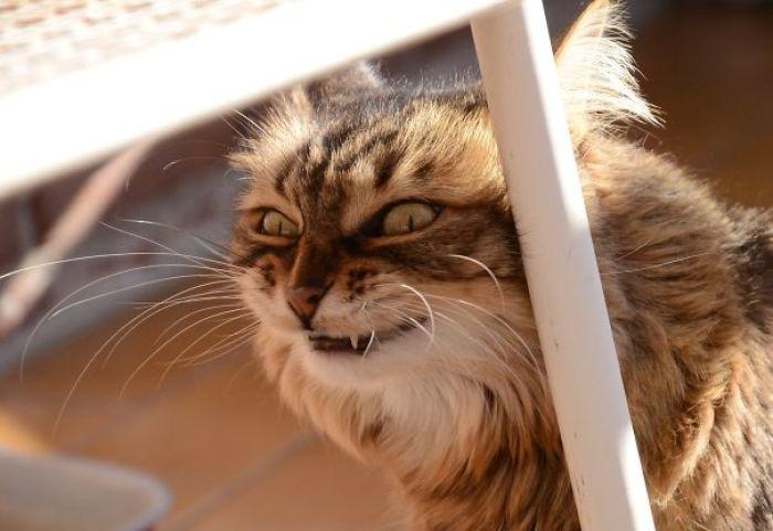 58d27e4e4ecdb  605 - 30+ Photos That Prove Cats Are Actually Demons