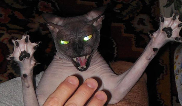 Evil Cats Demons Summoning Satan 106 58d0daa53ec3e  605 - 30+ Photos That Prove Cats Are Actually Demons