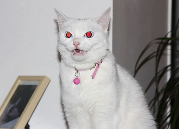 Evil Cats Demons Summoning Satan 114 58d0ea4213d2e  605 - 30+ Photos That Prove Cats Are Actually Demons