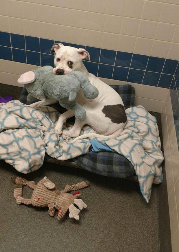 sad-dog-elephant-toy-gets-adopted-smokey-9