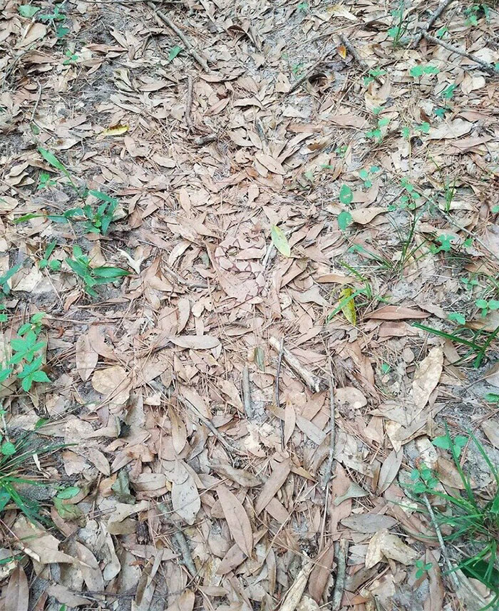 spotting-camouflage-snake-challenge-1