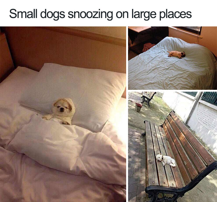 9 Small Dog Memes That Are So Cute They Ll Make You Drop