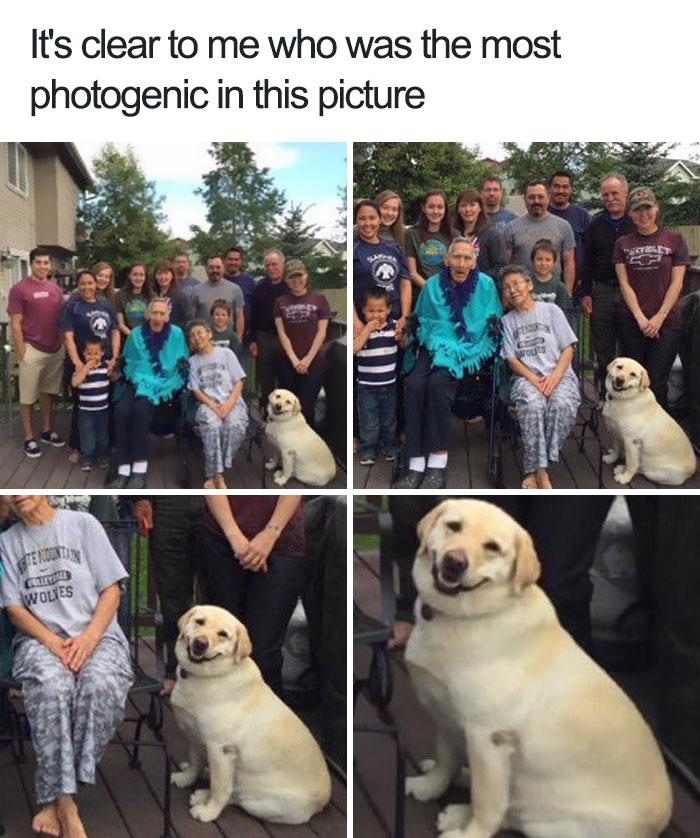 The Best Dog Memes Memedroid
