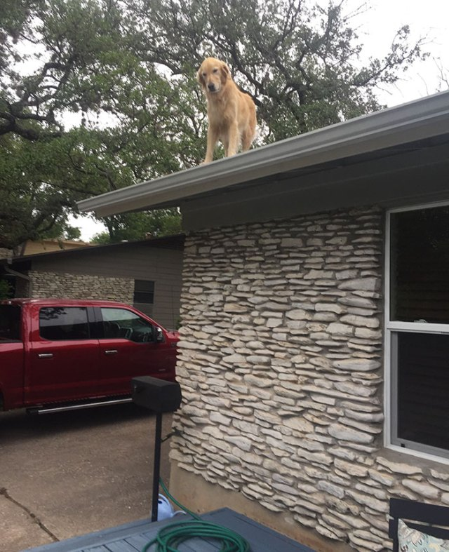dog-on-rooftop-note-huck-4