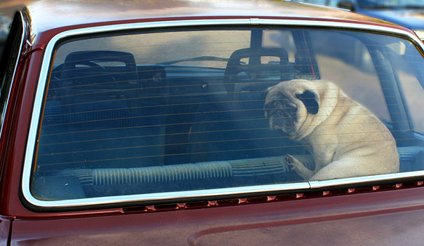 fried-egg-experiment-parked-car-dont-leave-dogs-hot-weather-18