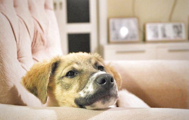puppy-covered-clue-rescued-pascal-11