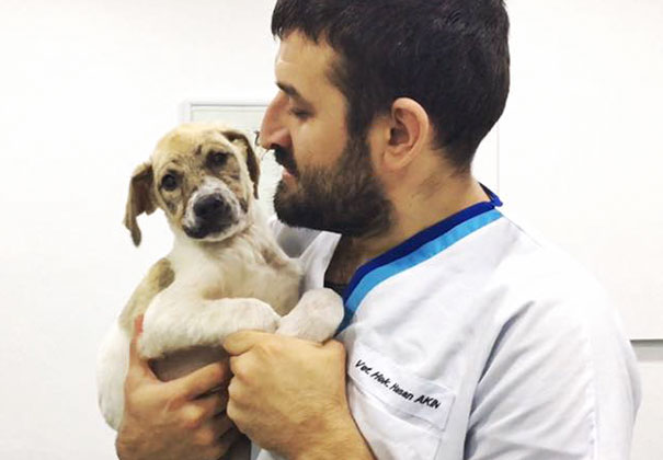 puppy-covered-clue-rescued-pascal-6