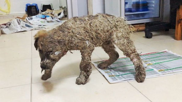 puppy-covered-clue-rescued-pascal-9
