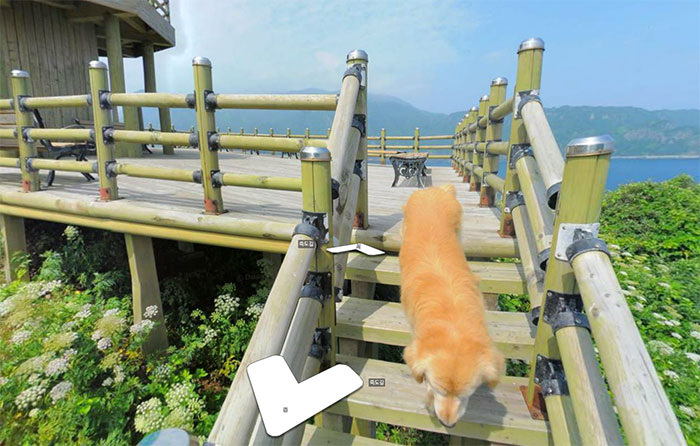 Dog-follows-street-view-photographer-south-korea-19
