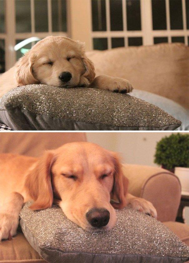 Qual a diferença de um ano (Sparkly Pillow For Scale)
