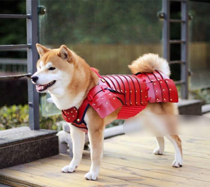 pet-dog-cat-armor-samurai-age-japan-7a