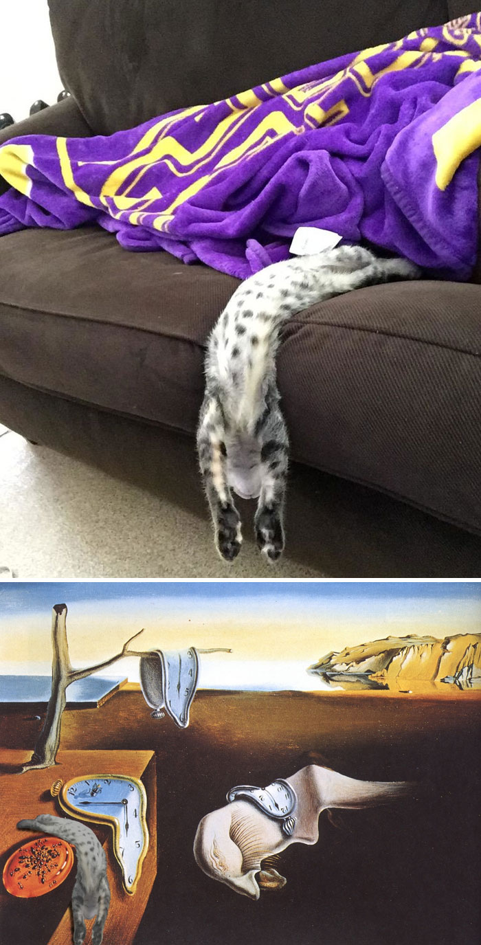 Cat Flowing Down A Sofa