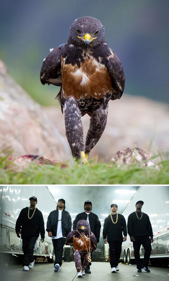 This Badass Hawk