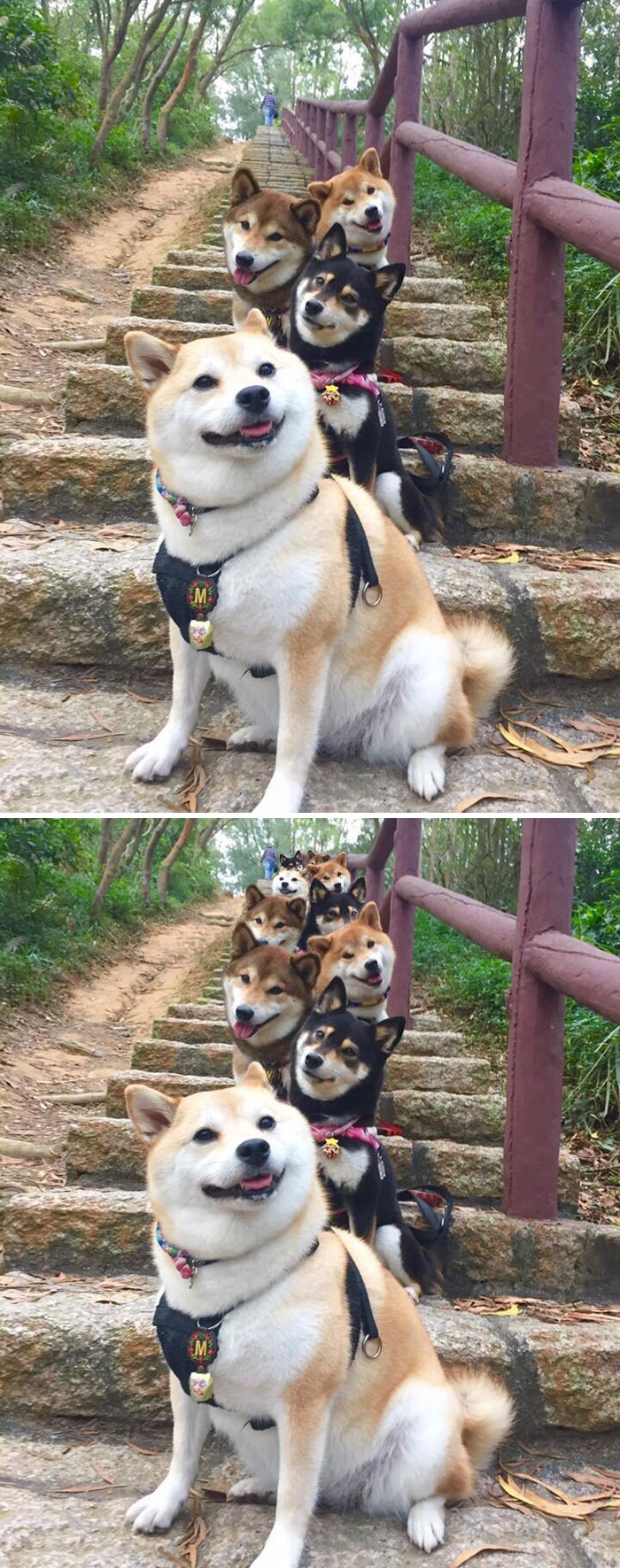 Doges Posing For A Photo