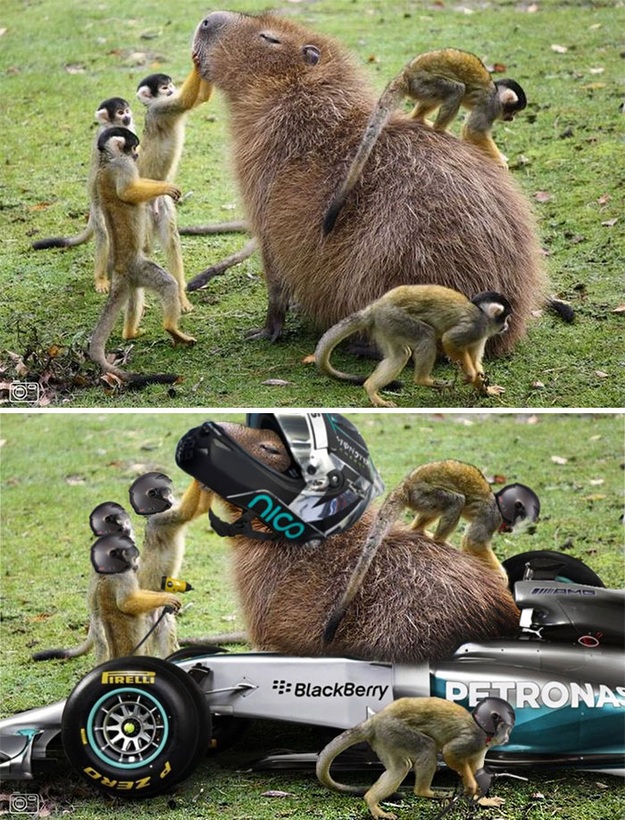 Capybara With Some Squirrel Monkeys