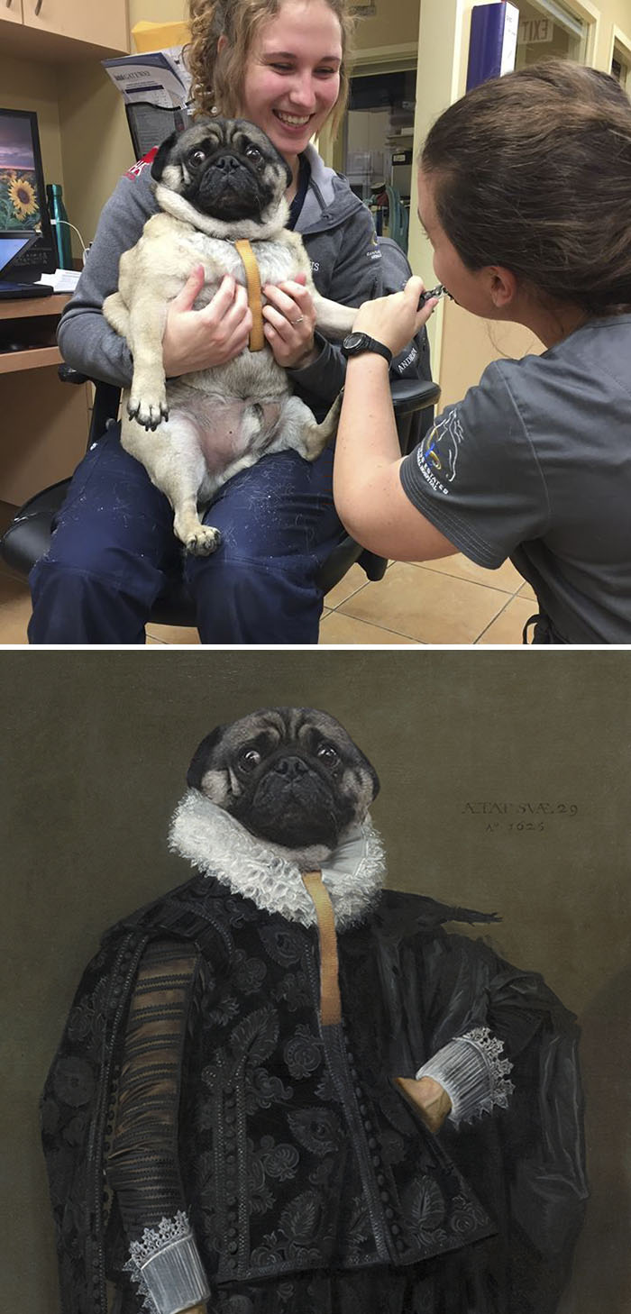 This Pug Horrified That It's Getting Its Nails Cut