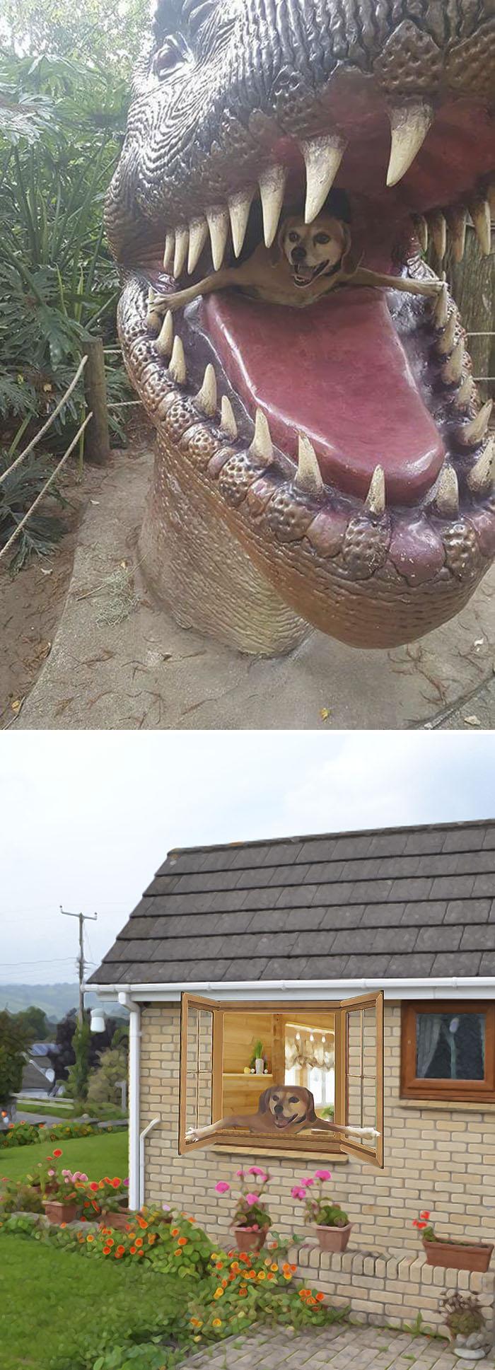 Dog Inside T-rex Mouth