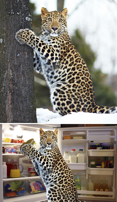Guilty Leopard