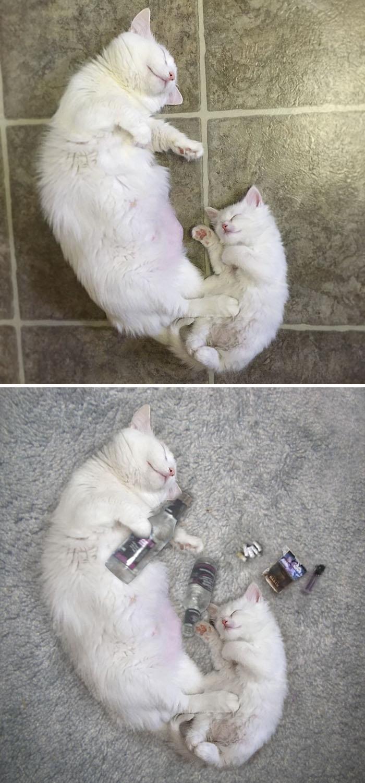 Momma Cat And Her Kitten