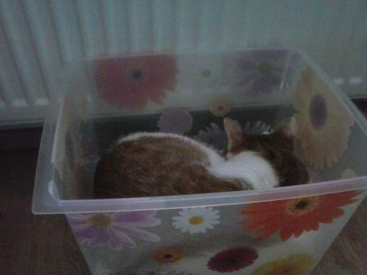 Murko In The Box :)