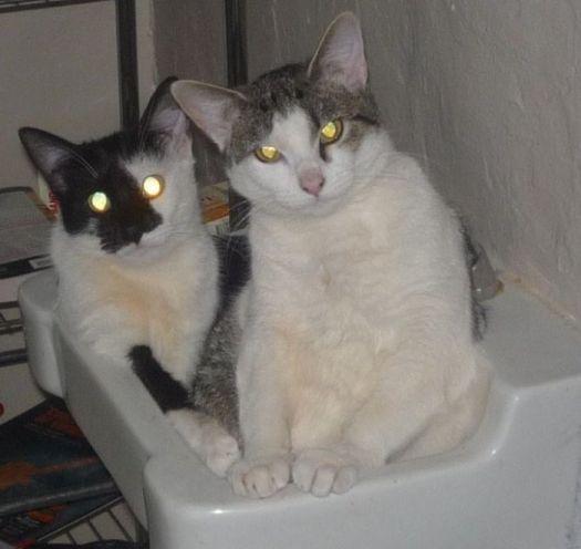 Sink Sitting