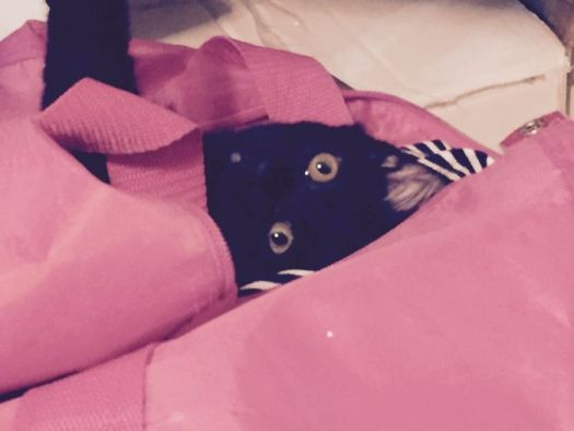 Princess Of Darkness In My Gym Bag