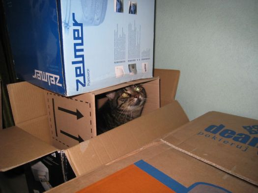 She Squeezed Herself Into One Of The Boxes Prepared For Moving Home ;)