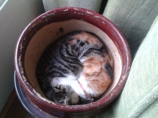 She Loves Plant Pots