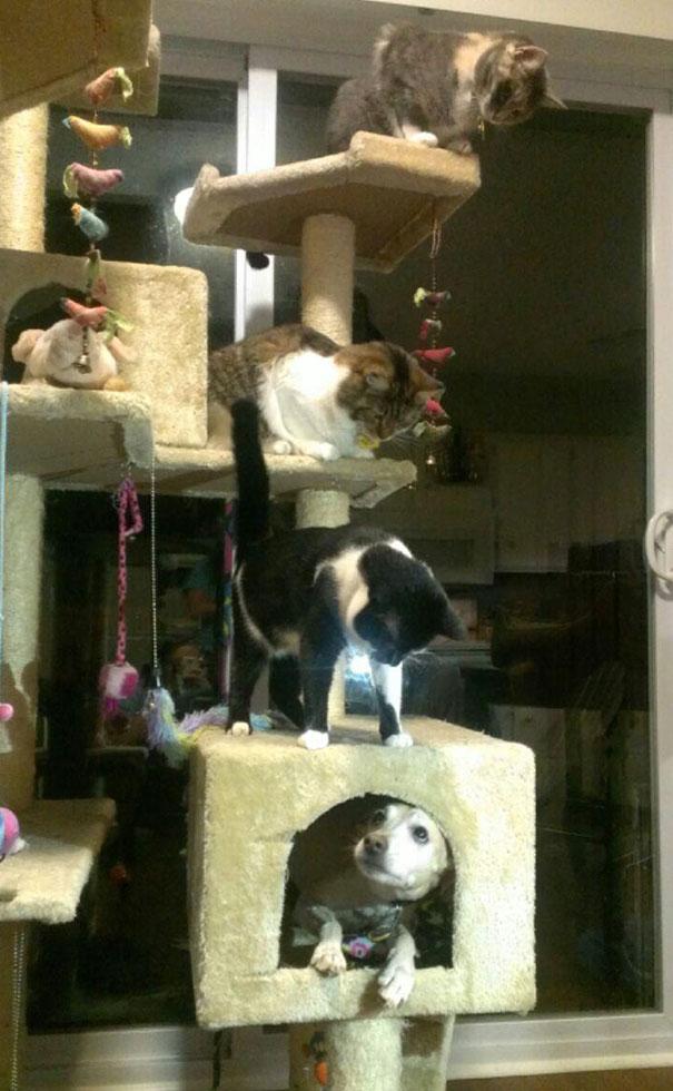 """dogs who think theyre cats 105 597f38835a0bd  605 - """"아파트 뽑아!"""" 집사들의 심장을 저격하는 귀여운 동물들 (사진 20장)"""