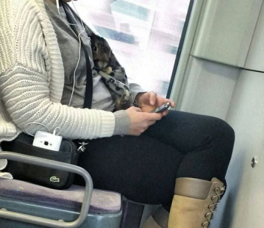 This Woman Is Taking Her Rabbit For A Ride On The Subway