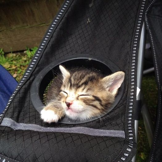 One Of My Friend's New Kittens, Already Obeying The 'If It Fits, I Sits' Rule
