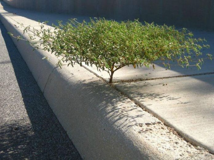 Fotografías de árboles