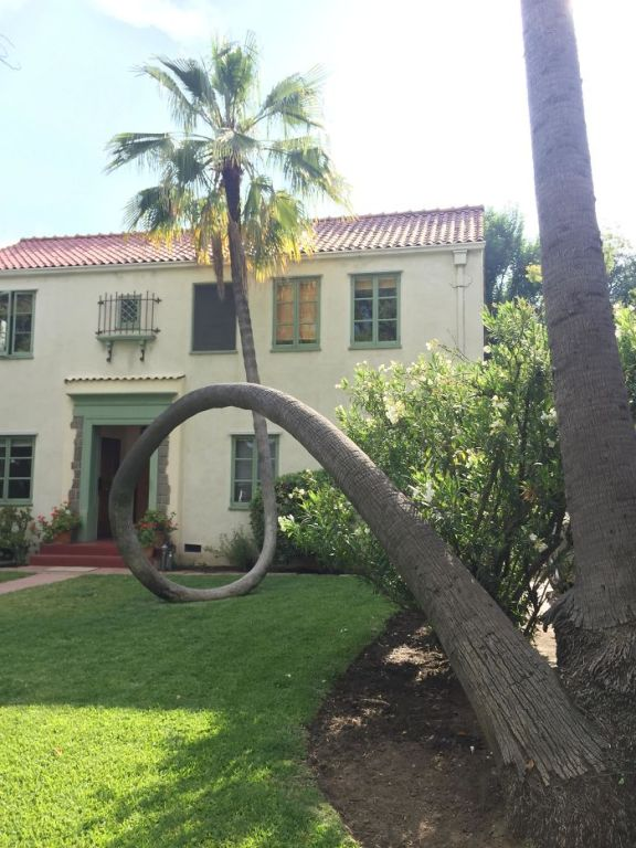This Palm Tree Fell Over And Curved Right Back Up
