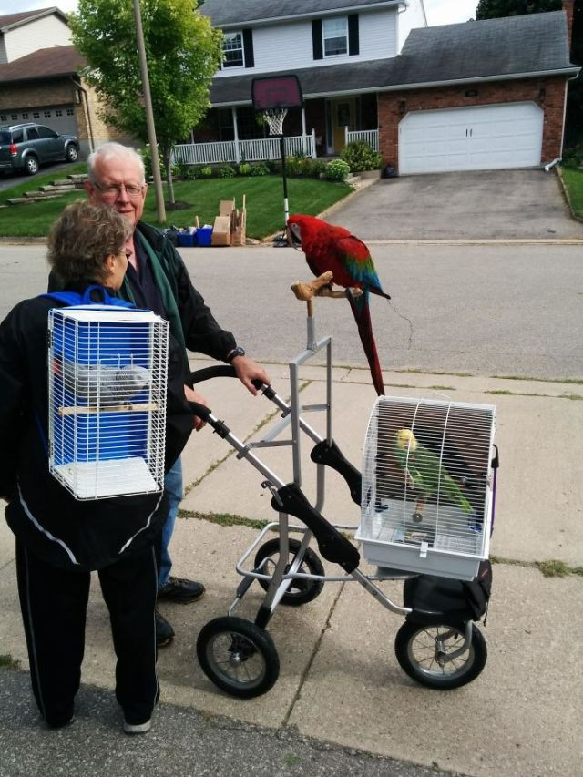 My Neighbours Walk Their Parrots