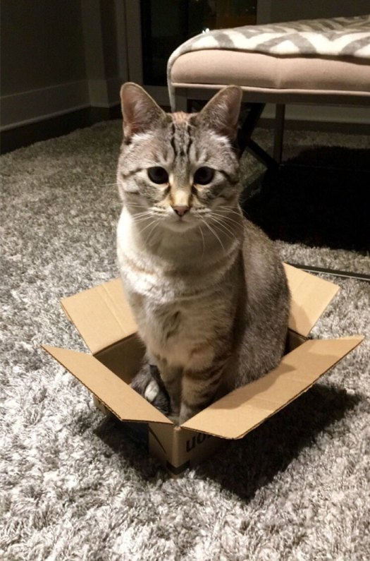 I've Never Had Cats, But I'm Catsitting This Week. Decided To Try An Experiment; Mogli Hopped Right In After The Box Had Been On The Ground For Only 3 Seconds. Cats Really Do Love Cardboard Boxes, I Guess