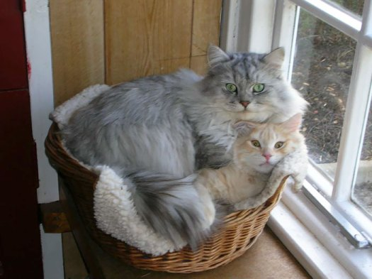 If You Fits, I Sits
