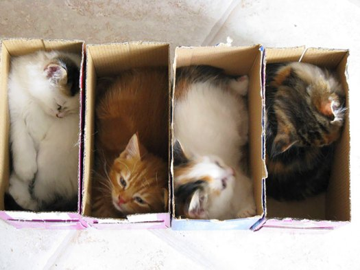 Who Ordered Boxed Kittens?