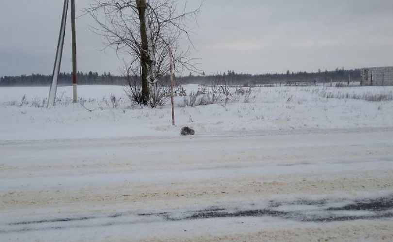 man rescues freezing kitten slava nika cat pusic 1 59886c22b8626  700 - A historia do homem e o gatinho congelado na Russia