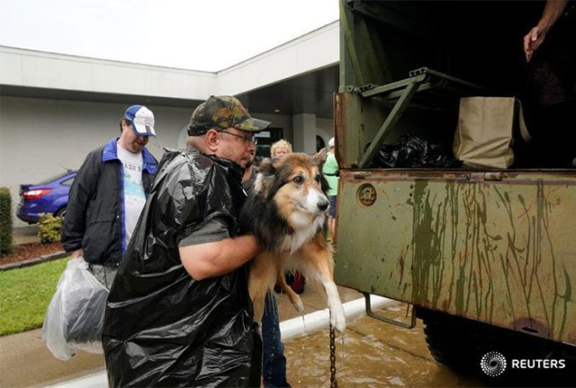 Texans Refuse To Leave Pets Behind As They Flee